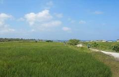 Sahaja & Sawah April 2009 (International Horizons) Tags: bali indonesia sawah sahaja