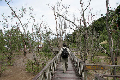 Mangrove swamps at Bako