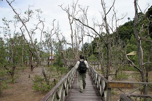 Mangrove swamps at Bako