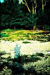 Shadow Morning (Aruna exp.) Tags: kodakelitechrome holga135