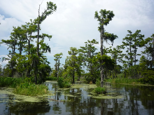 Day 4 airboat swamp tour 063