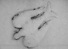 Descending dove (Will S.) Tags: dove descendingdove dovedescending representationoftheholyspirit mypics markham ontario canada bethesdalutherancemetery gravestones headstones gravestone headstone lutheran protestant protestantism lutheranism german christianity cemetery bw blackandwhite tombstone tombstones crypt mausoleum tomb