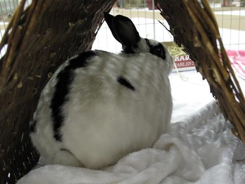 Bunnyfest.