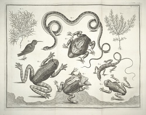 18th century wunderkammer - frogs and snakes