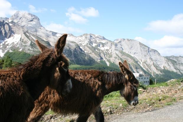 Pirineus Fotos 036