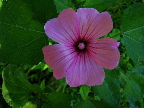 7-22-09 wildflower