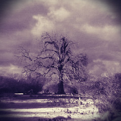 from my grandmother's attic (sidewaysview) Tags: tree nature monochrome clouds vintage square moody purple monochromatic vignette