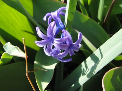 flower 2010.4.27-3