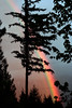 evening's prism (bijoubaby) Tags: trees sky usa color tree colors silhouette evening rainbow twilight colorful artist skies dusk creative arc prism line cielo indie fir wa curve independence conifer autonomy goldbar takeapicture rhymeswithorange netneutrality bijoubaby takeapictureitlastslonger matters2me bijoubabybaby itlastslonger