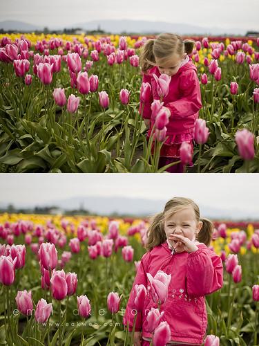 Skagit Valley tulips 2010