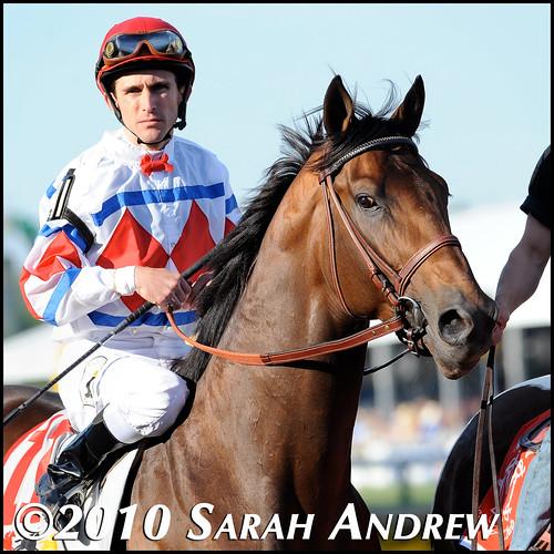 Racehorse #4