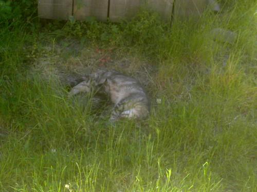 Une chatte en train de dormir avec un des ses petits devant chez moi.