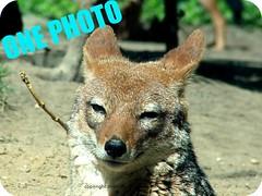 Hi ONE PHOTO friends! (miononephoto) Tags: onephotoweeklycontest