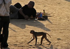 Juhu Beach - Dancing Monkey