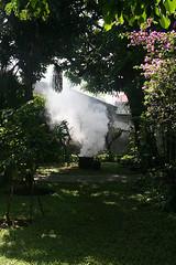 Smoking the Mango Tree
