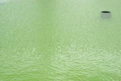 Grnes Wasser / Green Water (Walter Gilgen) Tags: walter pen olympus zrich nokton voigtlnder ep2 gilgen 35mm14
