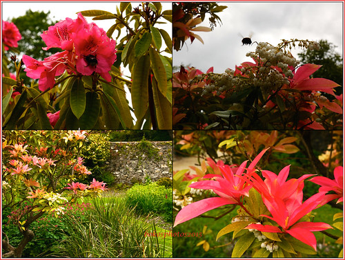 Flower Collage In The Garden