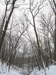 Adventures in Glen Stewart (margot.trudell) Tags: trees winter snow toronto beaches ravine glenmanor