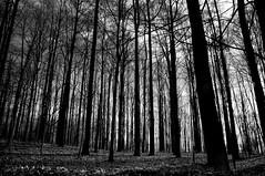 dormant (nosha) Tags: trees winter bw mountain tree nature beautiful beauty landscape nikon apocalypse january bald pm f11 2009 pate lightroom 18mm d300 baldpate 18200mm nosha nikond300 january2009 noshalikes