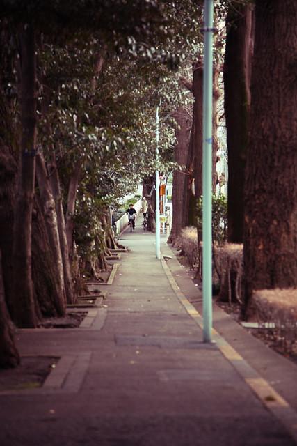 静かな側道