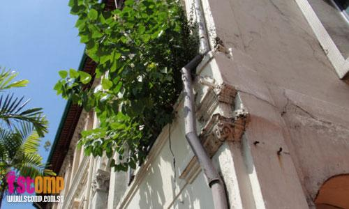 Tree growing on old shophouse may cause pillars to give way