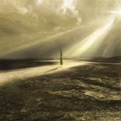 Algunos cipreses todavía creen en Dios, y son felices (el silencio) Tags: dreamcatcher justimagine naturepoetry bratanesque theunforgettablepictures lightiq thelittlebookoftreasures