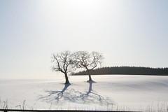 13 February 2009 (Copperhobnob) Tags: trees light shadow snow season landscape