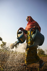 UNHCR highlights refugee women on International Women's day (UNHCR) Tags: woman water car garden women chad refugee farming shelter protection gender assistance unhcr equality settlement watering empowerment refugeecamp worldwaterday tchad 8thmarch centralafricanrepublic unrefugeeagency internationalwomensday2009 ambokocamp