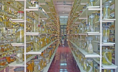 Specimen Room, Nha Trang Oceanographic Institute