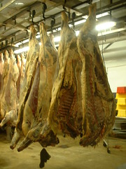 Fresh Kills (riffsyphon1024) Tags: dead death cows tennessee freezing hanging meatmarket stinks rutherfordcounty