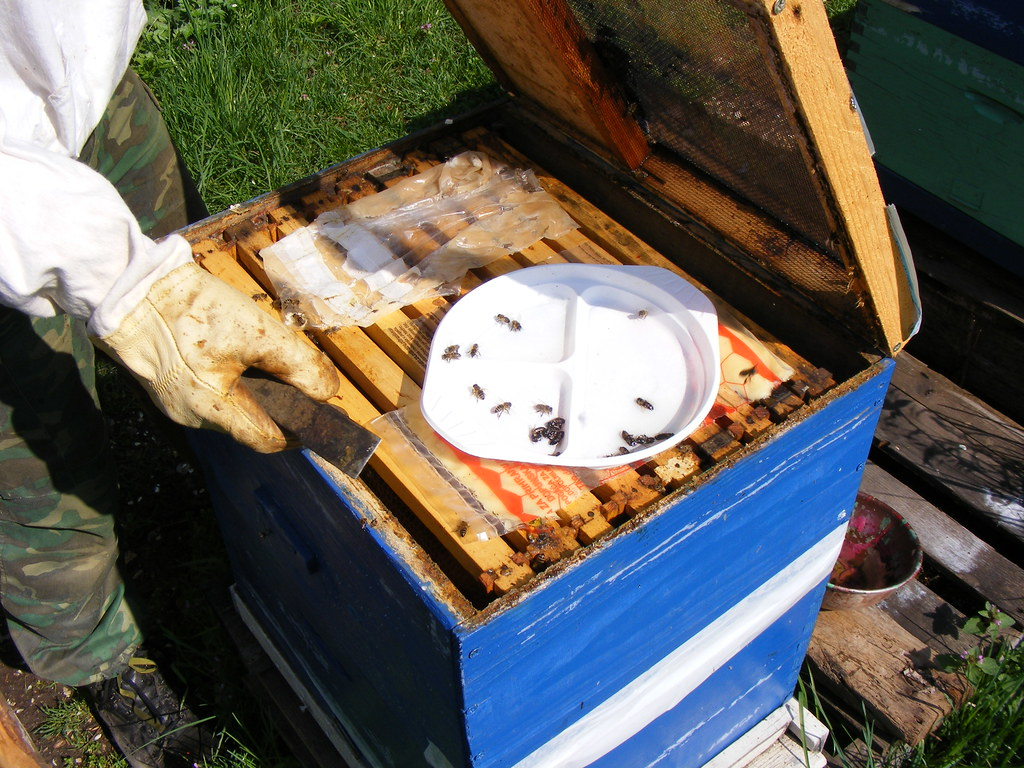 Bees Spring cleaning (22)