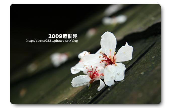 090427_14_油桐花坊