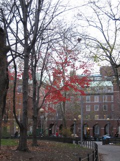Red Trees NYC
