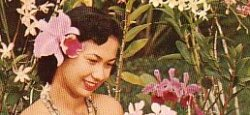hawaiian pin-up cropped