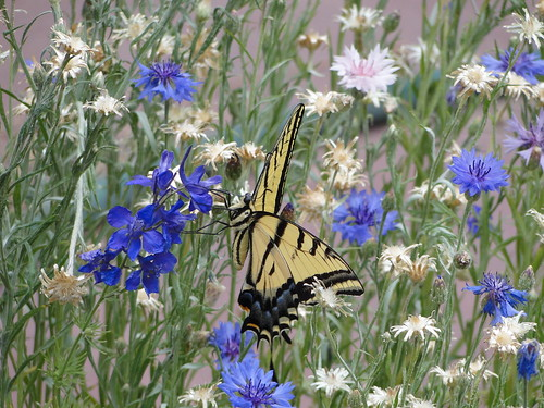 """flowers and butterfly • <a style=""""font-size:0.8em;"""" href=""""http://www.flickr.com/photos/10528393@N00/3601713468/"""" target=""""_blank"""">View on Flickr</a>"""