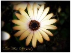 Full of Life (♥ Katie ann. Off more than on.) Tags: fantasticflower flowersarebeautiful flickrsfantasticflowers amiamoci amazingdetails addictedtoflower naturalezaenmagina weloveallflowers cherishyourdreamsandvisions