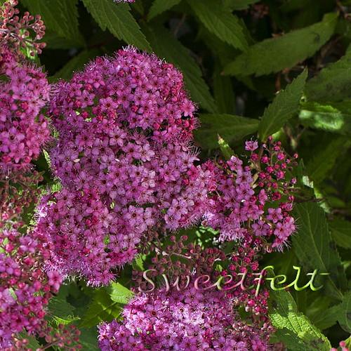 Tenham uma linda Quinta Flower!!! by sweetfelt \ ideias em feltro