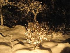 Coperta di neve (marco.cande89) Tags: snow alberi neve lilla