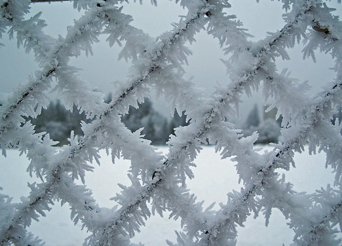 Spiky frost fence