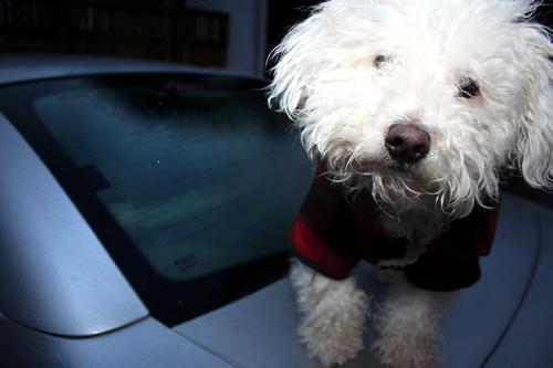Sadie & the looming ICE STORM