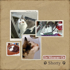Shorty (Sunny Days) Tags: digital cat scrapbook layout load shorty designerdigitals