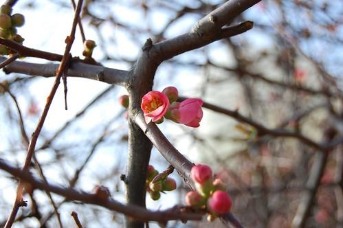 Spring blossoms 5