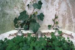 treboles (esquizobestia) Tags: 35mm hojas lavabo trebol treboles canillas