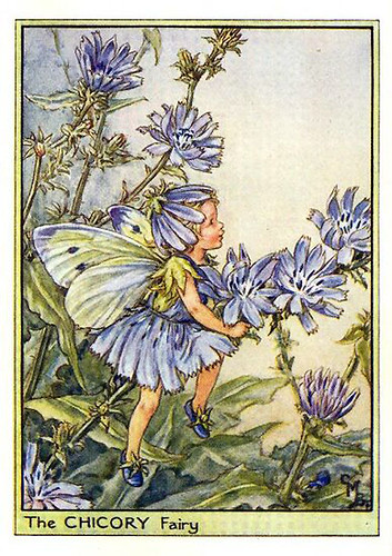 020-chicory_flower_fairy