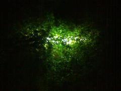 1 (ajwd167) Tags: light tree green love night dark romance  167        ajwd