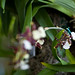 BotanicalGardenOrchids-15