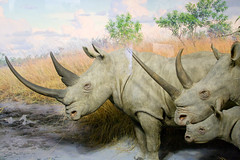 CB293 White Rhinoceros (listentoreason) Tags: newyorkcity usa newyork nature animal museum america canon mammal united