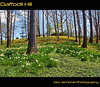 Daffodil Hill (Don Iannone) Tags: flowers ohio spring flickr poem god magic cleveland bluesky divine explore daffodilhill frontpage daffodils springtime wmp greengrass lakeviewcemetery imagepoetry april2009 doniannone pictureandapoem nikond80camera doniannonephotography nature'sbeauty