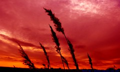 Looking for the Silver lining... (law_keven) Tags: sunset red england sky orange clouds reeds suffolk silhouettes orford orfordness cloudage explore500