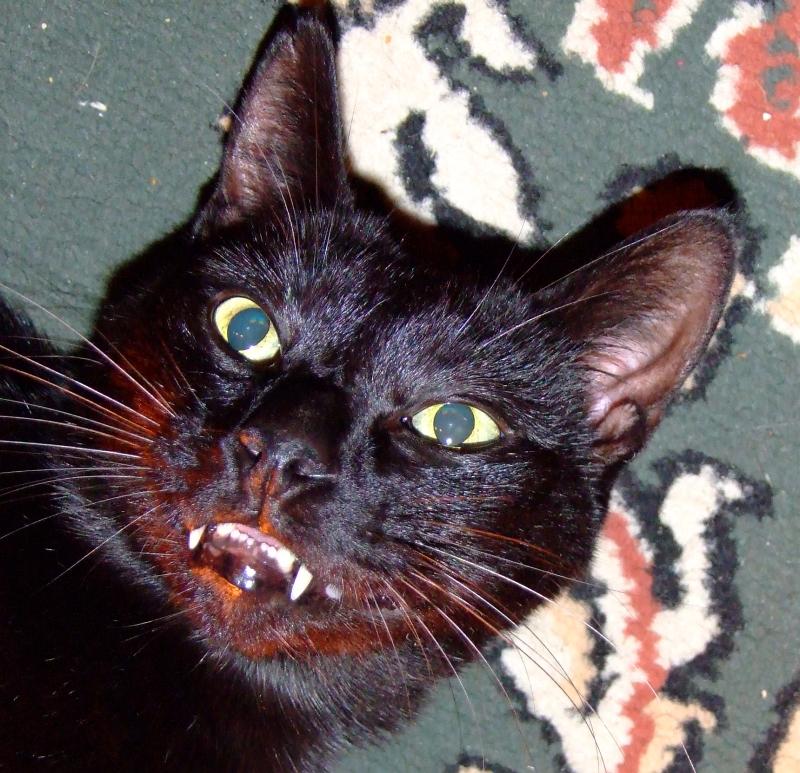 vampire cat again